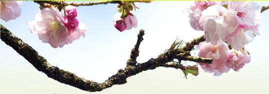 2012阿里山新印象-神木下婚禮山海戀