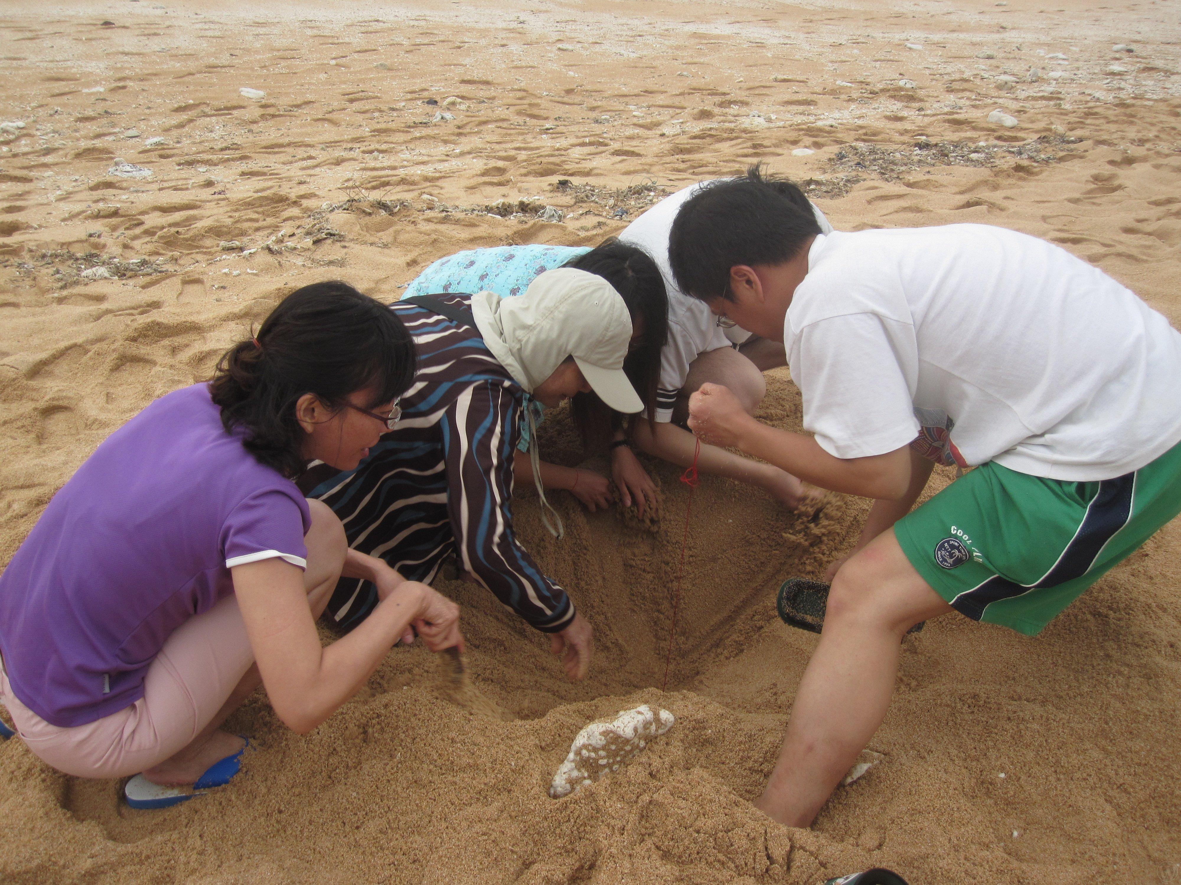綠蠵龜生態研習活動