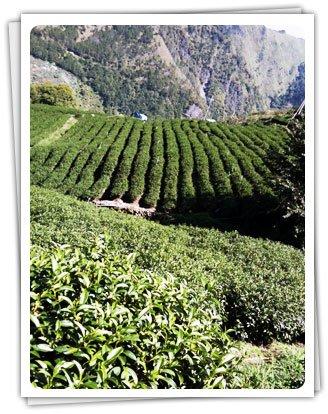 品圓製茶廠 : 探索台灣優質茶文化
