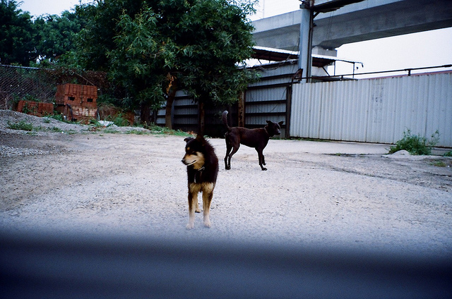 Leica C1 testshot