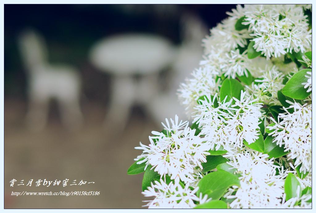 流苏花_又是一年赏花季奇异流苏花_samo299