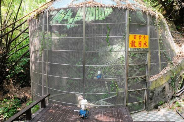 小琉球碧雲寺竹林生態池